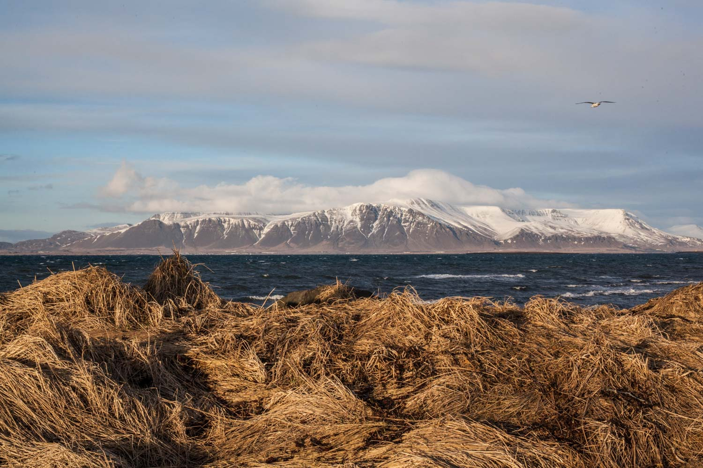 ICELAND -2